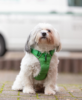 Büro Hund Balou